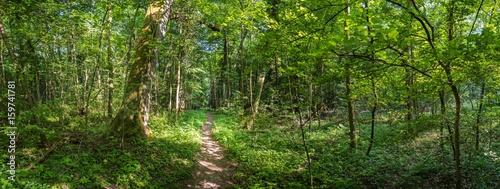 Foto op Canvas Weg in bos Urwald Pfad Panorama