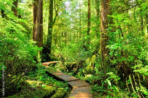 Photo  Hiking trail through the rainforest of Pacific Rim National Park, Vancouver Isla