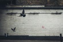 Pigeons Across A Wall In London