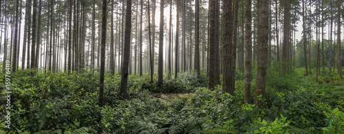 Photo  forest panorama