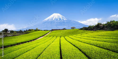 Fototapeta premium Mount Fuji mit Teefeldern w Shizuoka, Japonia