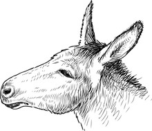 The Head Of A Sad Donkey