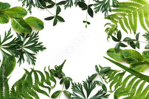 Green leaves on white background. Top view with copy space. Floral pattern.