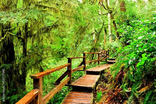 Photo  Wooden trail through the rainforests of Pacific Rim National Park, Vancouver Isl