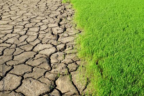 Environment - fresh green grass and dried earth Canvas Print