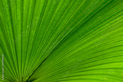 The Palm Leaf Background Abstract Green Line Texture Green