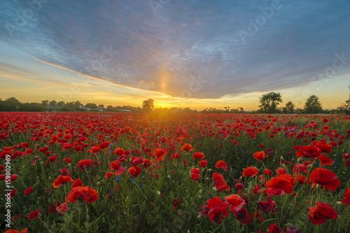 Foto op Plexiglas Klaprozen Sunset over a poppy meadow