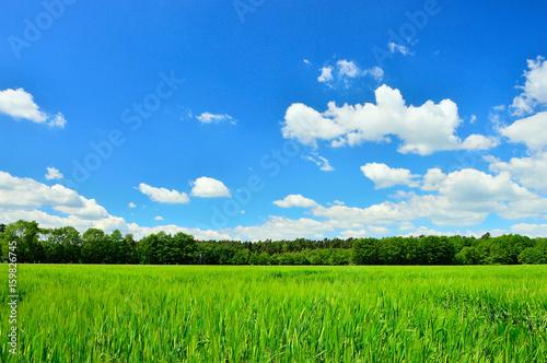 Fototapeta Pole, las i niebo z chmurami.  obraz
