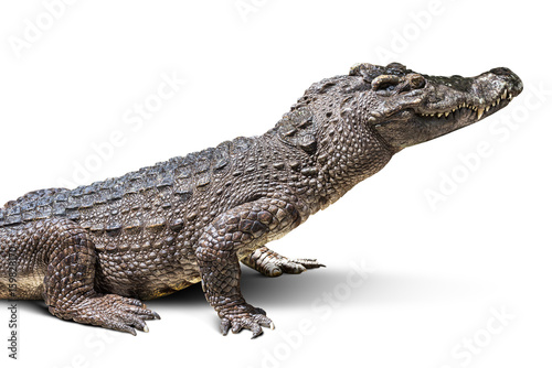Autocollant pour porte Crocodile Crocodile isolated