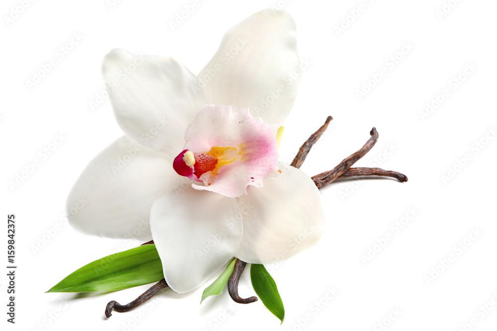 Fototapety, obrazy: Dried vanilla sticks and flower on white background, closeup
