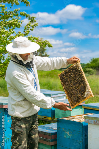 Photo Beekeeper inspecting frame with honeycomb full of bees