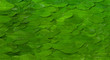 Green natural background with acacia leaves