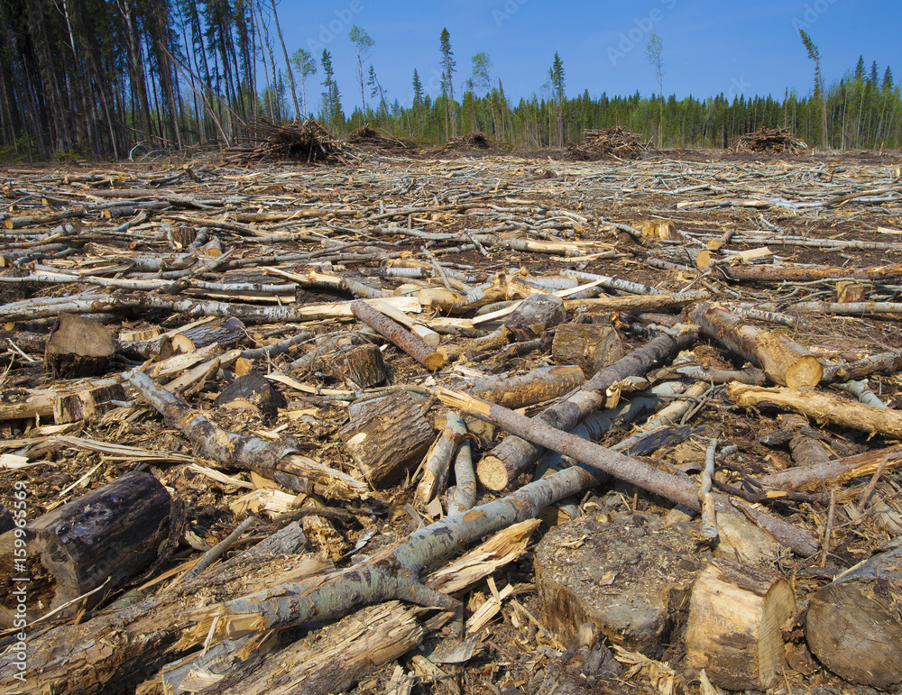 a discussion on the issue of deforestation in canada Learn the causes, effects, and solutions you can contribute to help stop deforestation.