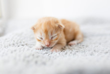 Orange Little Newborn Kitten L...