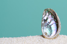 Iridescent Abalone Shell On Wh...