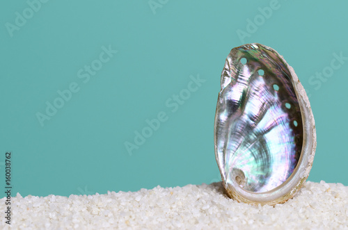 Iridescent abalone shell on white sand on turquoise background Canvas Print