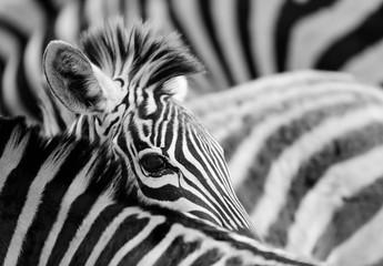 Fototapeta na wymiar zebra eye