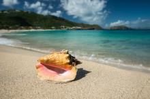 Big Shell On A Caribbean Beach