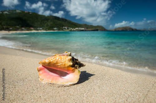 Slika na platnu Big shell on a Caribbean beach
