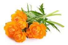 Beautiful Orange Flowers Isolated On White