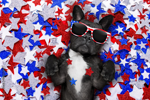 Aluminium Prints Crazy dog independence day 4th of july dog