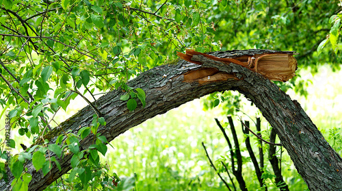 Photo tree trunk broken after stormy weather