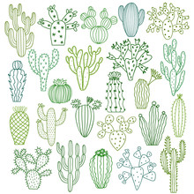 Cactus Vector Illustrations. Hand Drawn Cactus Plants Set