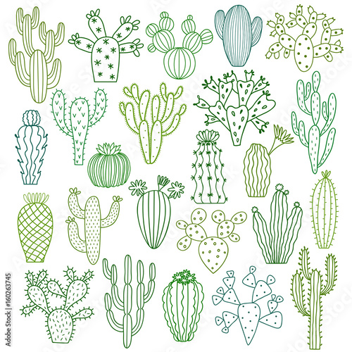 Obraz na plátne Cactus vector illustrations. Hand drawn cactus plants set