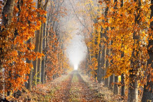 Plakaty do przedpokoju  perspective-lane-on-a-foggy-morning-in-autumn