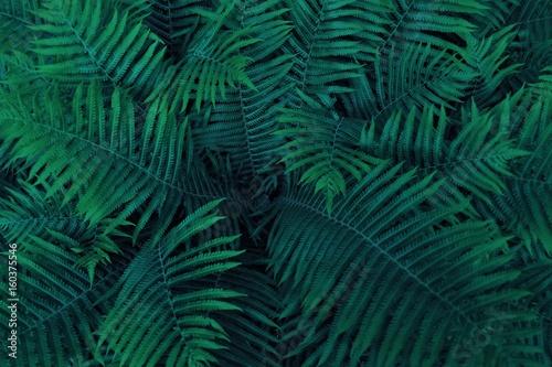 Ingelijste posters Tropische Bladeren Beautiful green fern with long leaves in the forest