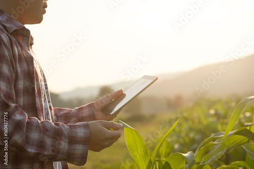 Wallpaper Mural Farmer man read or analysis a report in tablet computer on a agriculture field with vintage tone on a sunlight,agriculture concept