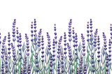 Watercolor lavender design - 160448737