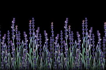 Fototapeta Lawenda Watercolor lavender design