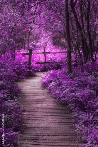 Beautiful surreal purple landscape image of wooden boardwalk throughforest in Spring