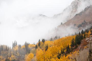 Fototapeta Do salonu Foggy Cloudy Mountain Autumn Forest