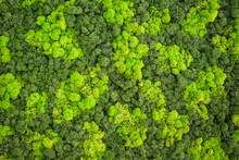 Wall Decoration With Moss. Moss And Lichens For The Decoration Of The Room.