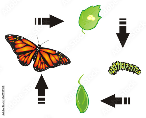 Butterfly Monarch Wings Flying Insect Nature Cartoon Black