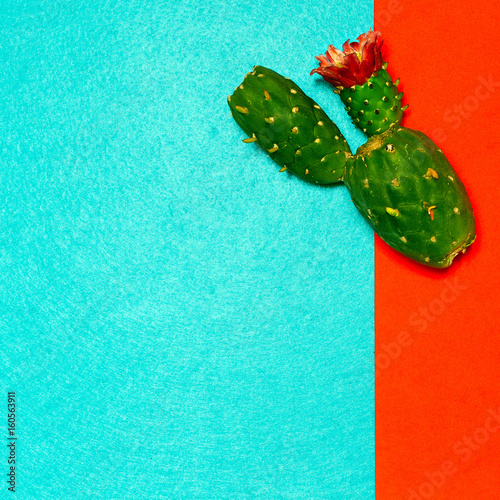 Photo  Cactus plant minimal design