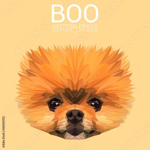 Fényképezés  Boo Pomeranian Dog animal low poly design
