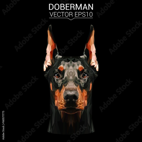 Fotografija Doberman dog animal low poly design