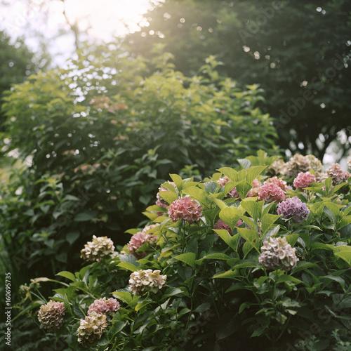 Foto op Aluminium Tuin Riverside Park garden