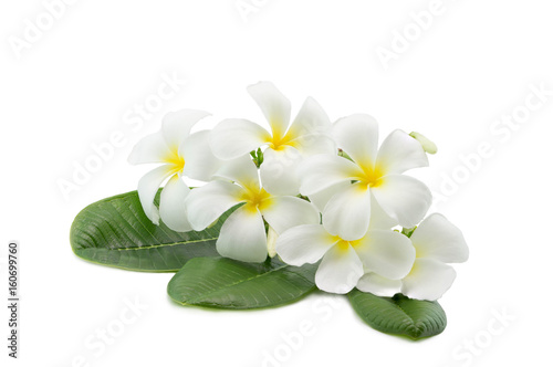 Tuinposter Frangipani Tropical flowers frangipani plumeria isolated on white with clipping path