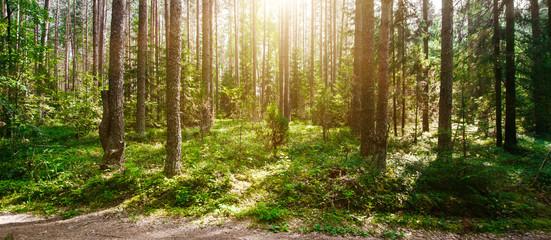 FototapetaSummer forest jungle