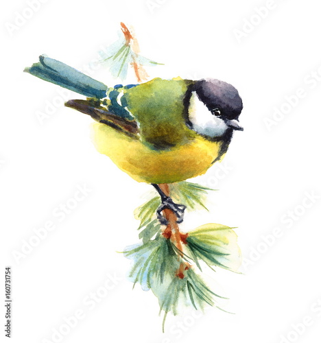 sikorka-sikora-ptak-z-zoltym-brzuszkiem-na-galezi
