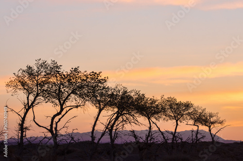 Poster Corail silhouettes of trees on hill with orange sky on background