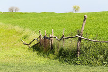 An Old Broken Fence Of Tree Branches And A Grid Between The Field Of Green Wheat And Meadow