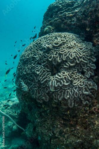 Plakat Rafowy i Morski życie w Chumphon Morskim parku narodowym, Tajlandia