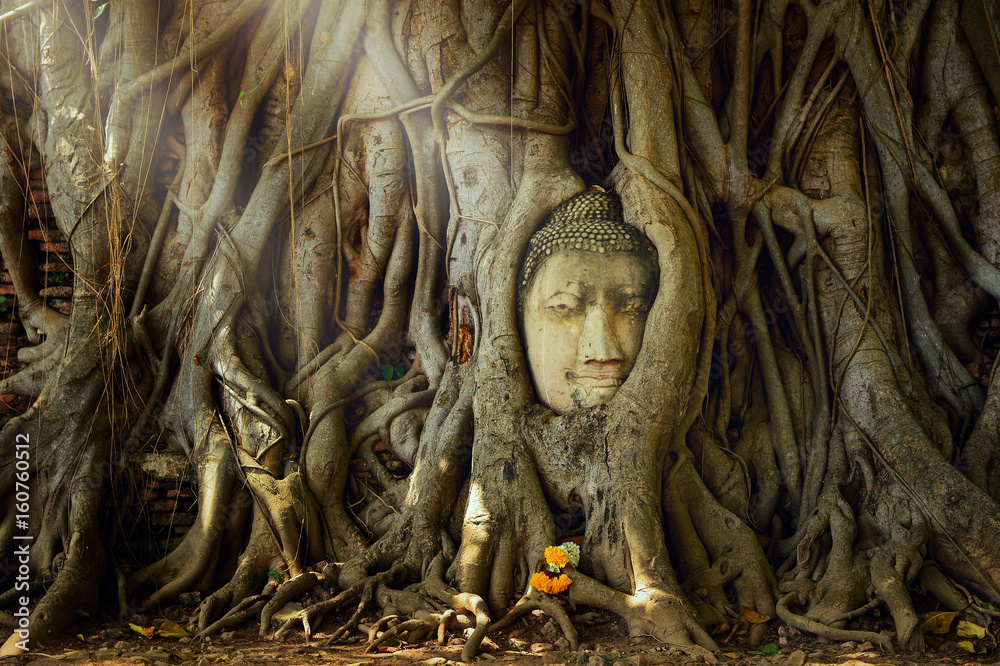 Fototapety, obrazy: Amazing sand stone buddha head in tree root in Mahathat temple, Ayutthaya, Thailand, UNESCO,Thailand temple
