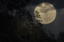 Mountain Forest In A Full Moon...