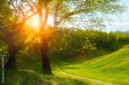 Obraz Summer landscape at summer sunset - sunny colorful summer nature - fototapety do salonu